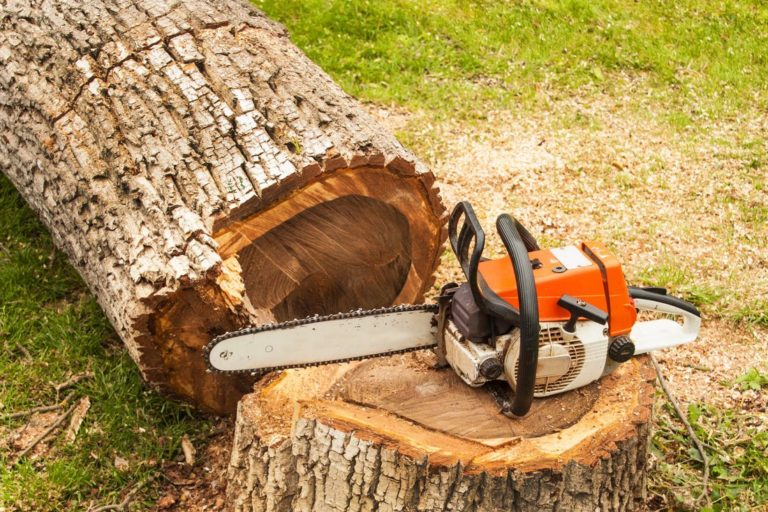 Tree Service Cost